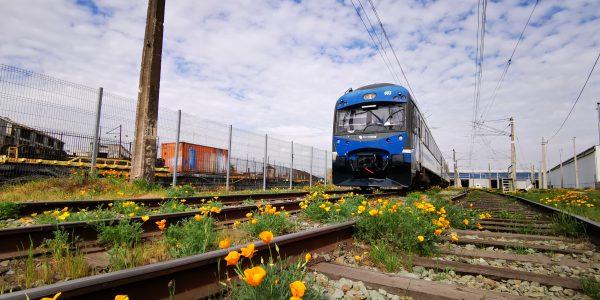 Tren Central sumará nuevas salidas diarias para servicio Alameda – Chillán.